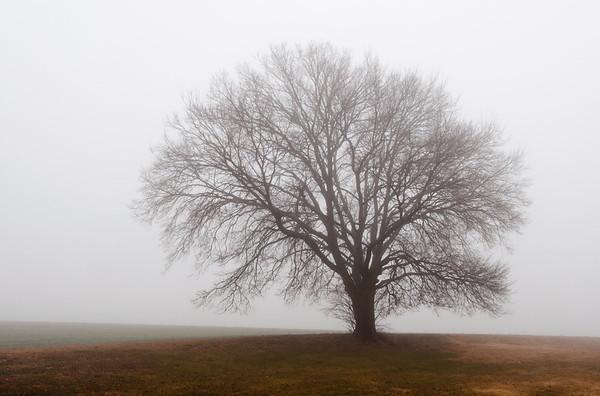 Fog~Belleville