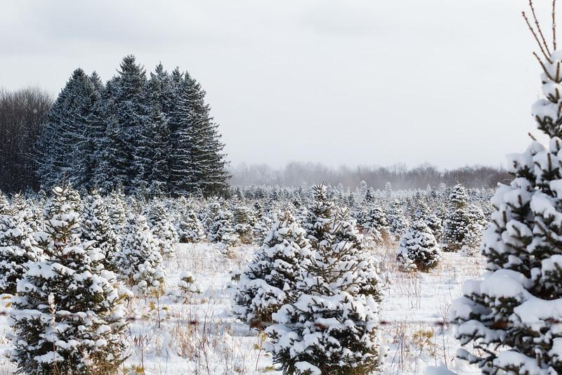 Winter 2015 Blog