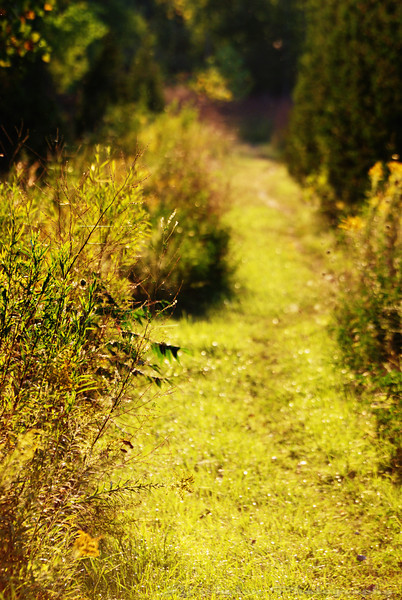 This is an inviting path but I do not know where it leads. Should I go or stay on known ground? Have a great day - JY