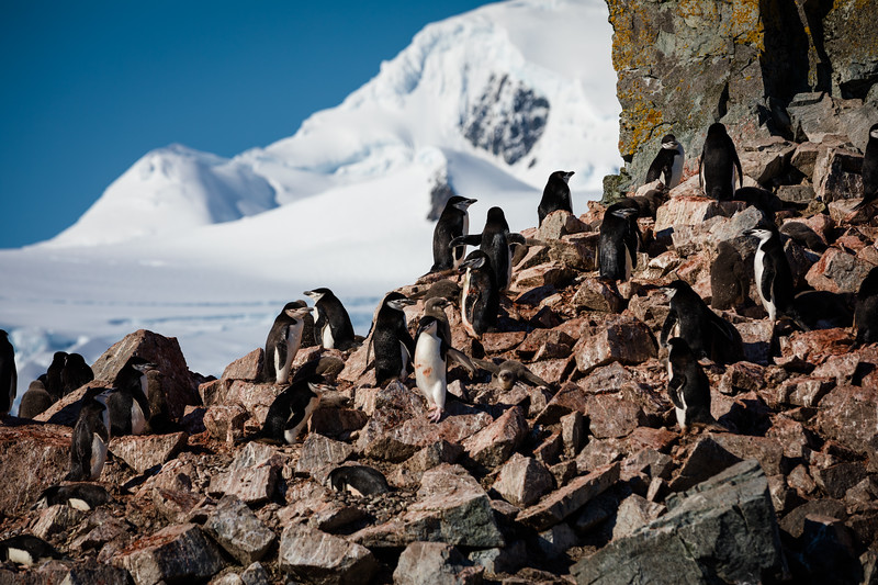 _MG_4507_20170119_Antarctica.jpg