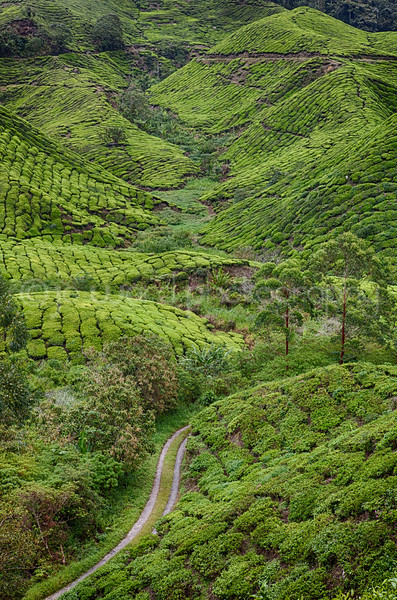 Cameron Highlands (22 of 38).jpg