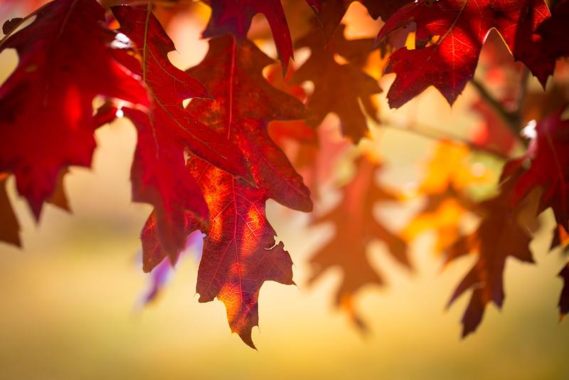 20151024-Fall Colors-72.jpg