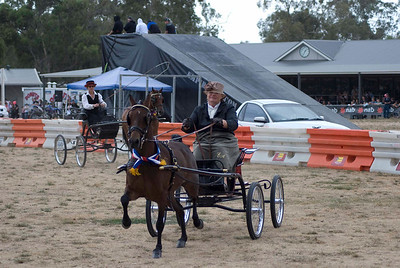 Berwick Show 2009 - Harness Saturday - Gallery 4