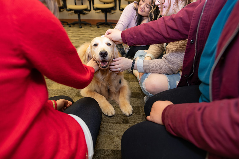 Therapy Dogs Sassy-7133.jpg