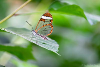 butterflies :: 2017