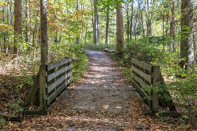 11_Rowe Woods_Autumn_2016