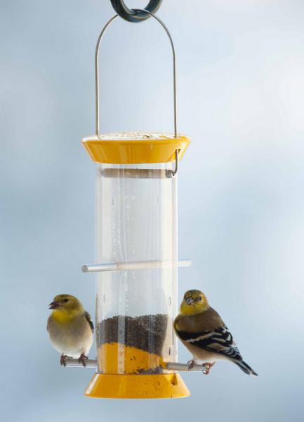 Finch3.jpg