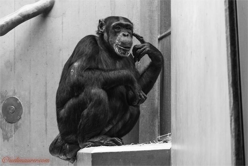 2017-11-16 Zoo Basel - 0U5A8435.jpg