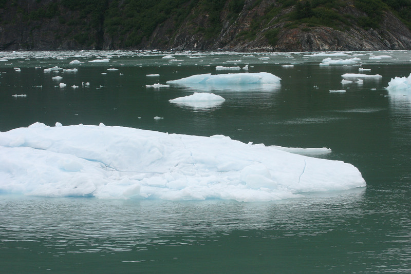 ice bergs in Tracy Arm