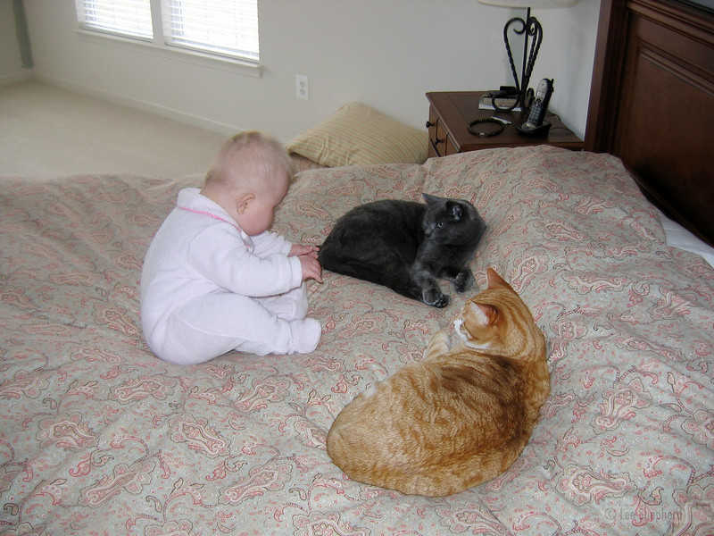 The kitty hunter closes in on the wild beasts.