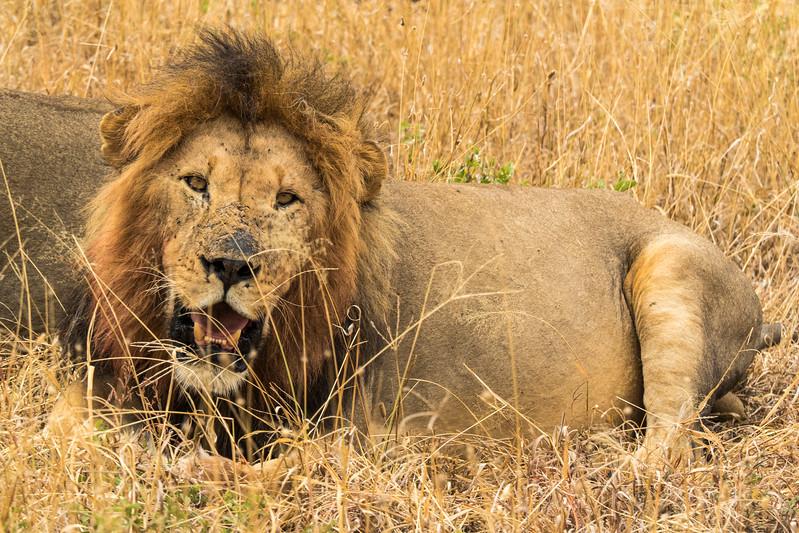 Tanzania_Safari-best-35.jpg
