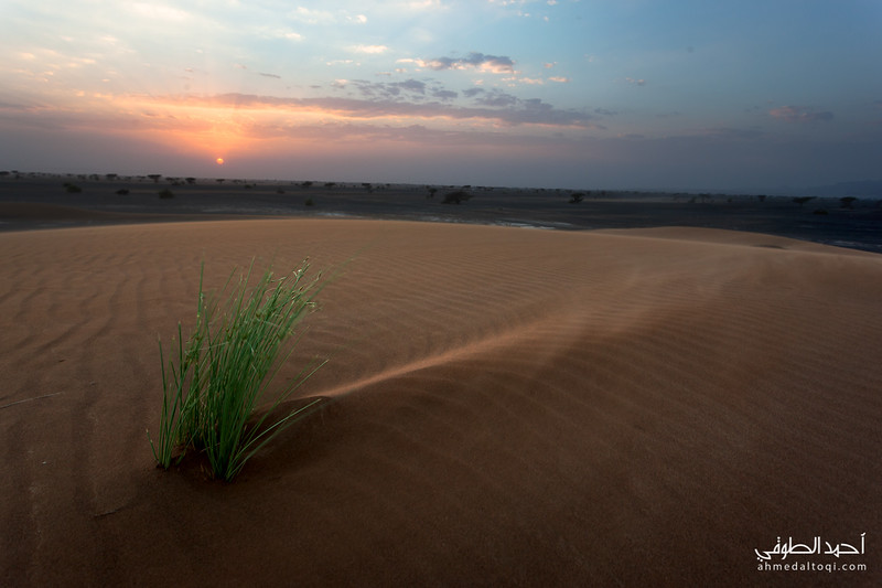 Oman (281).jpg