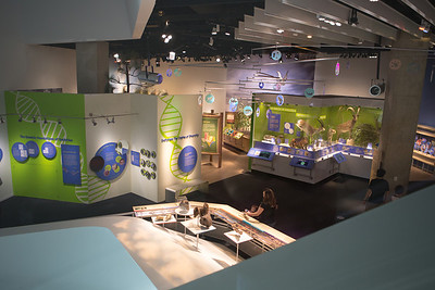 Dallas Perot Museum of Nature and Science and surrounding area