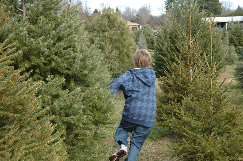 12-06-08 Christmas Tree-014.jpg