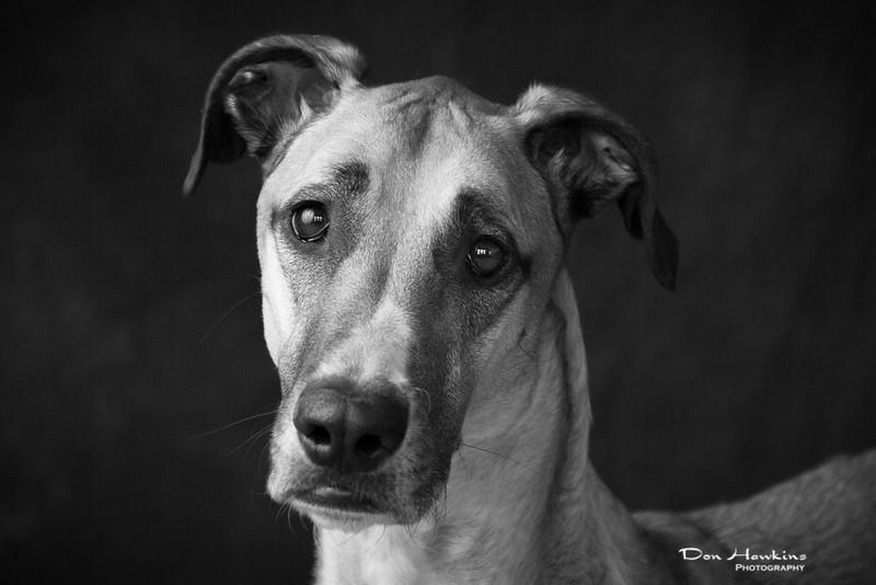 emily-mason-pets-2014-0414.jpg