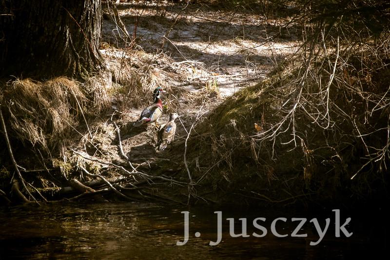 Jusczyk2021-5864.jpg