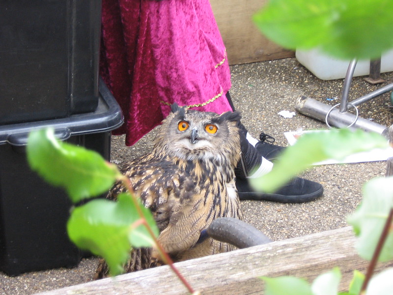 A good Knight Owl