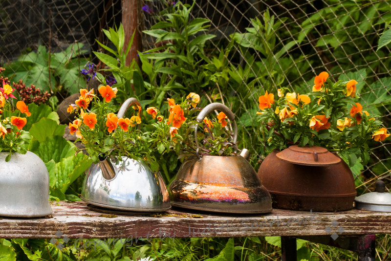 Tea Kettle Planters