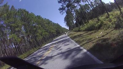 Great S GA and N FL Roads