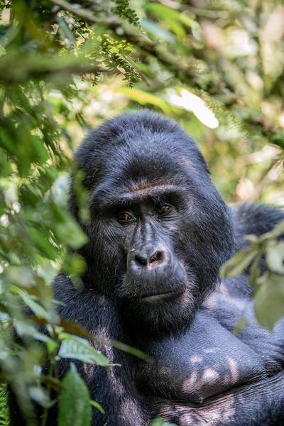 Uganda_T_Gor-288.jpg