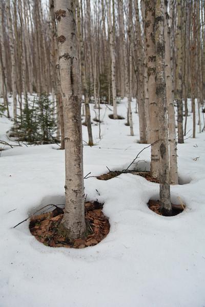 Birch Potholes