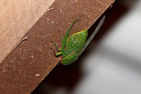Cicadas & Hoppers