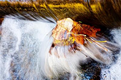 Water Series -The Mysteries of Sligo Creek