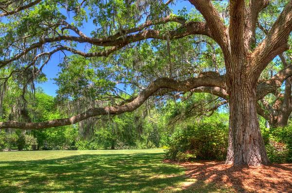 South Carolina Landscape and views