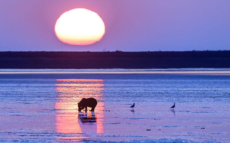bear sunrise.jpg