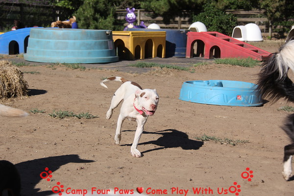 Summer Doggie Fun 6/13-14, 2015