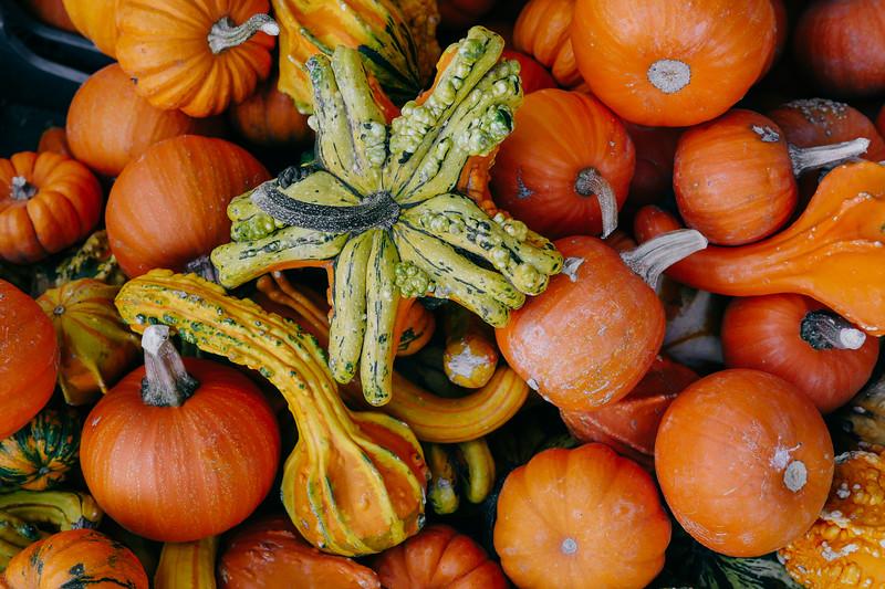 assorted pumpkins  (1 of 1).jpg