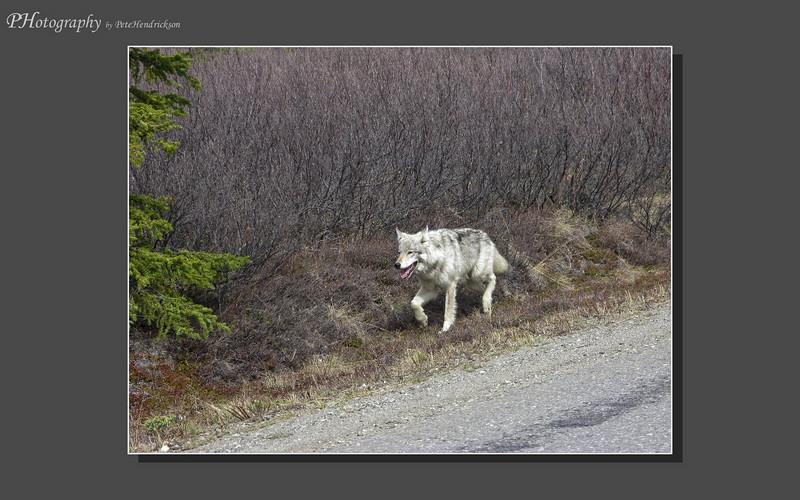 My Alaska 12-08-067.jpg