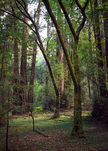 muir woods 2017