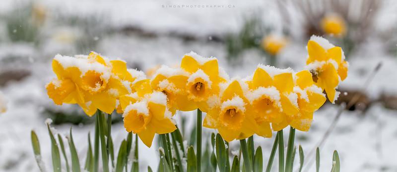 springwinter.jpg