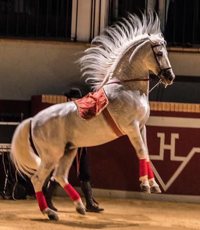 Seville equestrian
