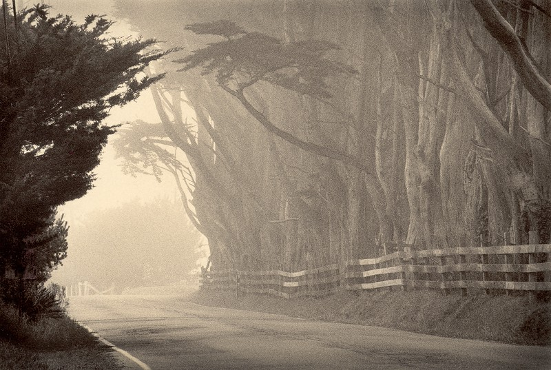 Windy Hollow, Point Arena, California