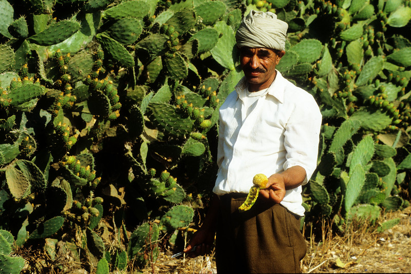 Mohamed and prickly pear.jpg