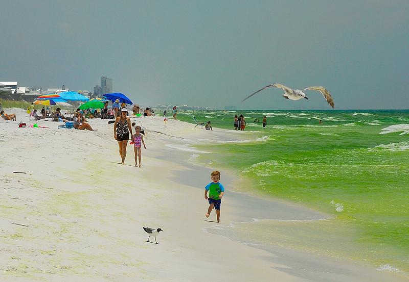 Chasin Gulls - SeaCrest Beach FL