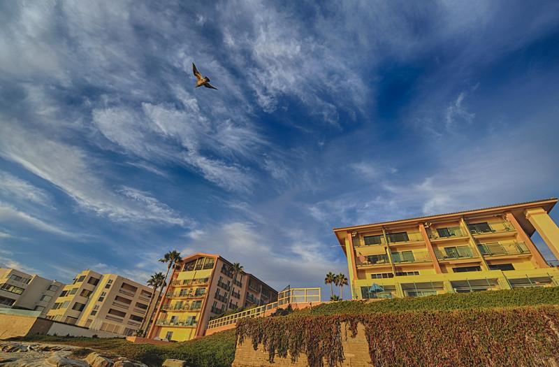 soaring gull over la jolla sunset