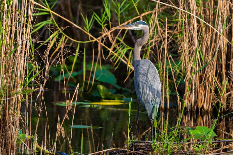 Everglades (34 of 37).jpg
