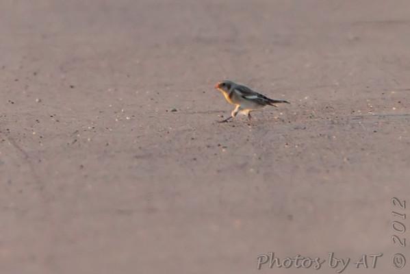 2012-11-12 Riverlands Migratory Bird Sanctuary