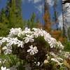 Wildflowers - Landmark Airstrip