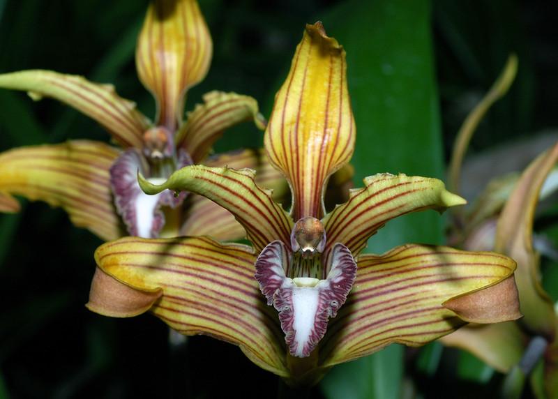 Orquidea 8.jpg