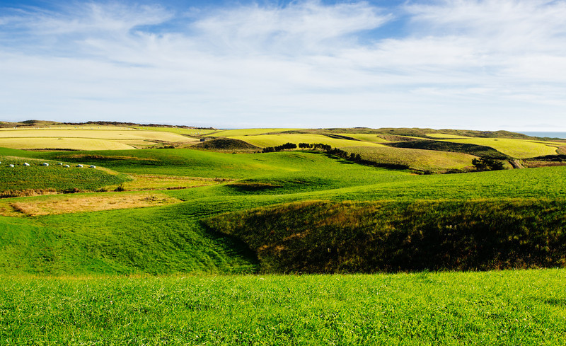 Green New Zealand