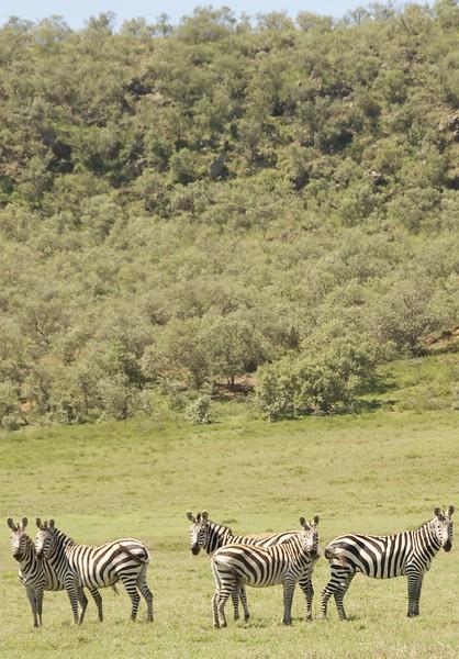 Kenya.Card1.02.2014 322
