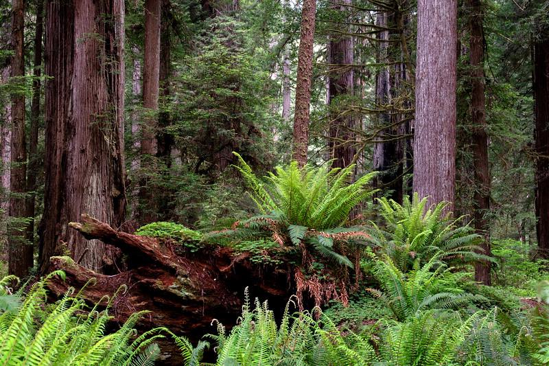 x1_12x18_LUSTRE_redwoodsFin31-1341.jpg