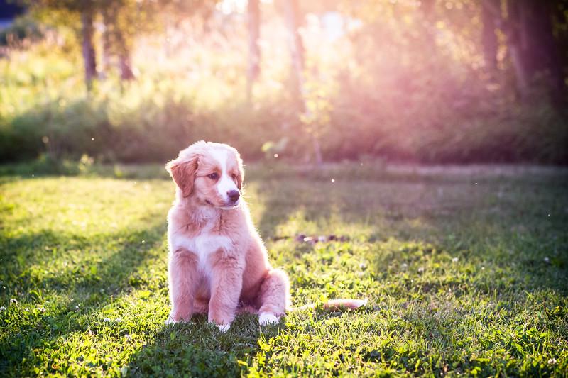 PuppyPhotos-28.jpg