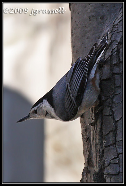 Titmice and nuthatches