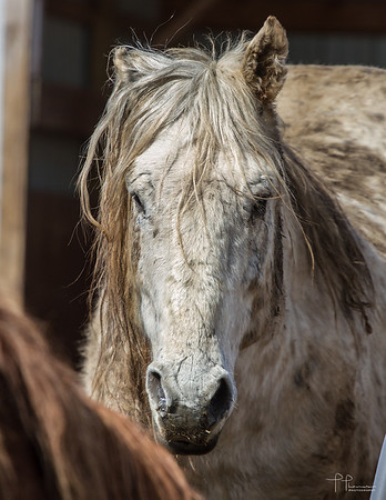 Goodhue Horses March 29th