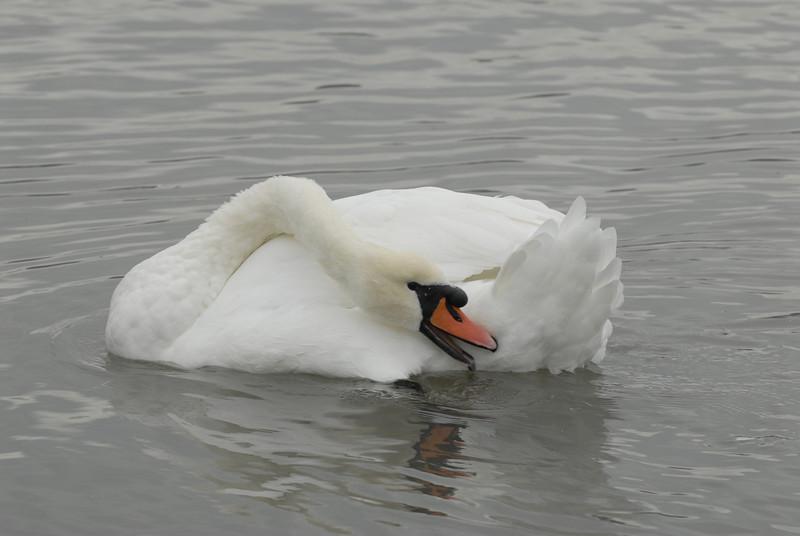 070903 8335 Canada - Victoria - Fort Rodd Hill and Canada geese _F _E ~E ~L.JPG